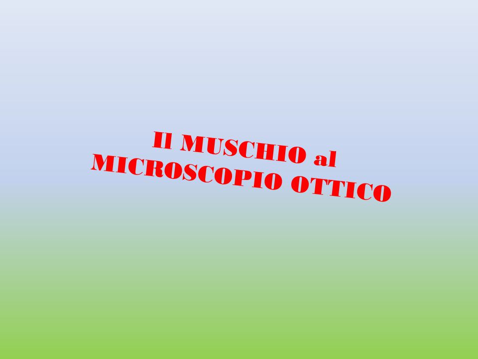 Il MUSCHIO al MICROSCOPIO OTTICO