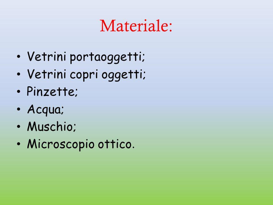 Materiale: Vetrini portaoggetti; Vetrini copri oggetti; Pinzette;
