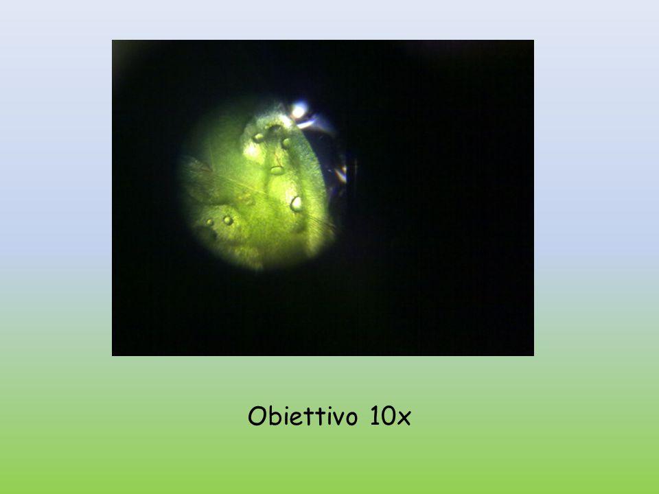 Obiettivo 10x