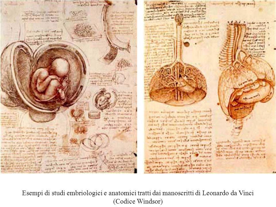 Ecco, ad esempio, alcuni studi embriologici ed anatomici tratti dal Codice Windsor di Leonardo da Vinci
