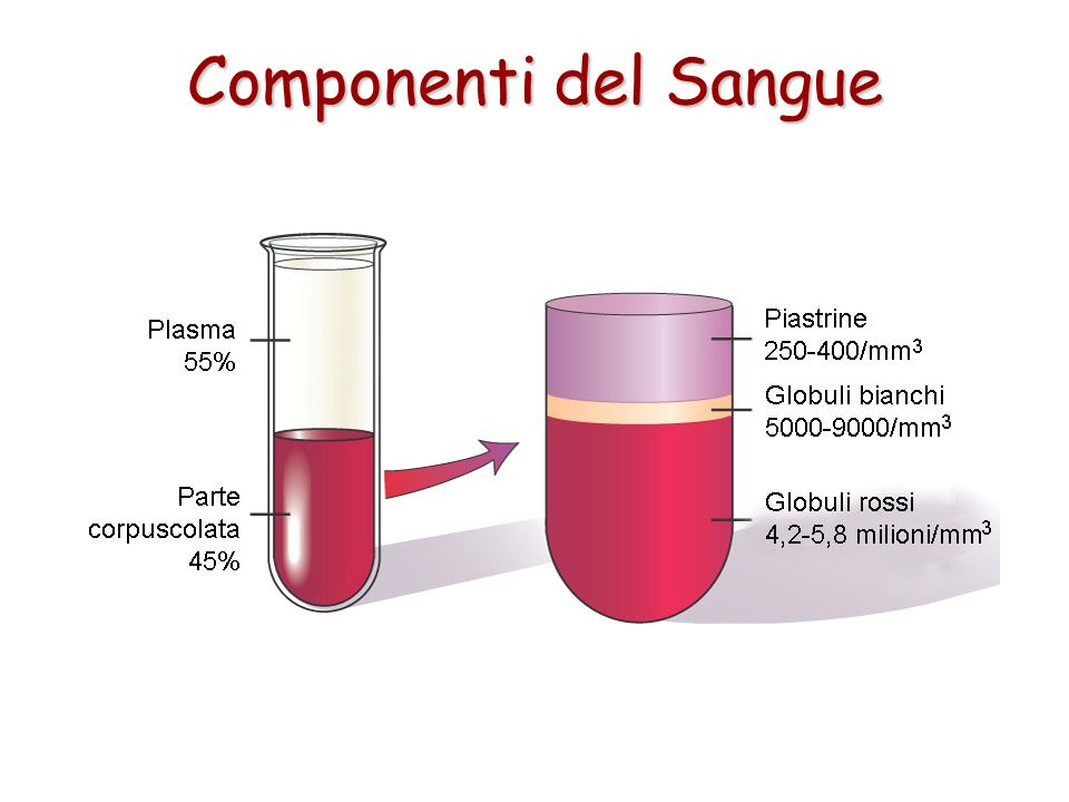 Componenti del Sangue