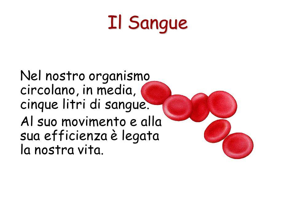 Il Sangue Nel nostro organismo circolano, in media, cinque litri di sangue.