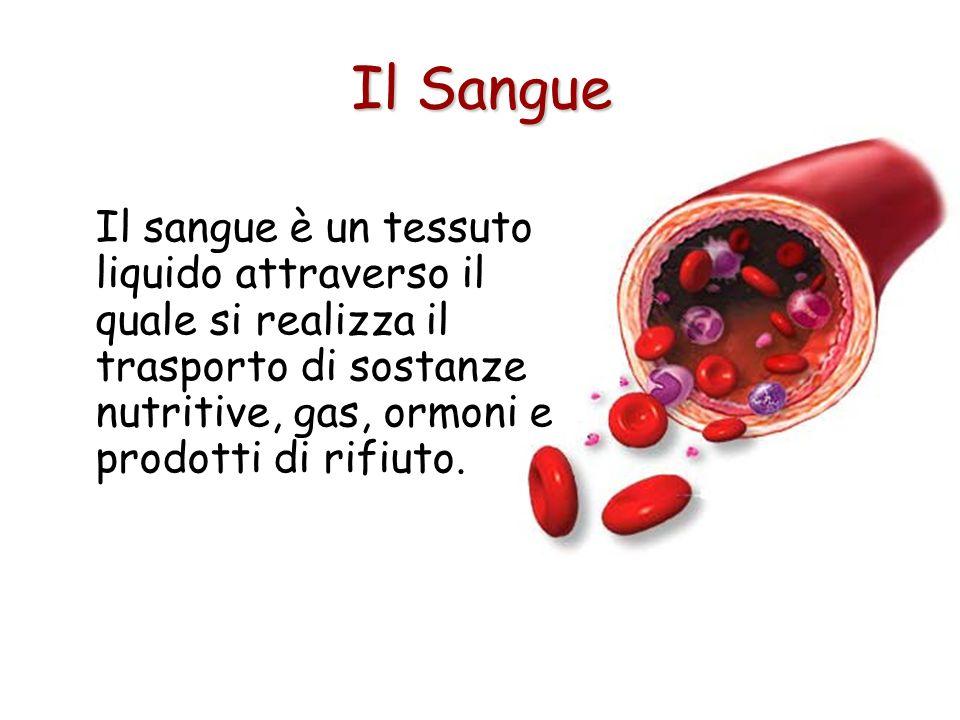 Il SangueIl sangue è un tessuto liquido attraverso il quale si realizza il trasporto di sostanze nutritive, gas, ormoni e prodotti di rifiuto.