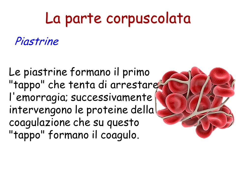 La parte corpuscolata Piastrine