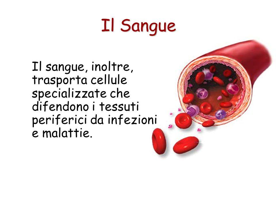 Il Sangue Il sangue, inoltre, trasporta cellule specializzate che difendono i tessuti periferici da infezioni e malattie.
