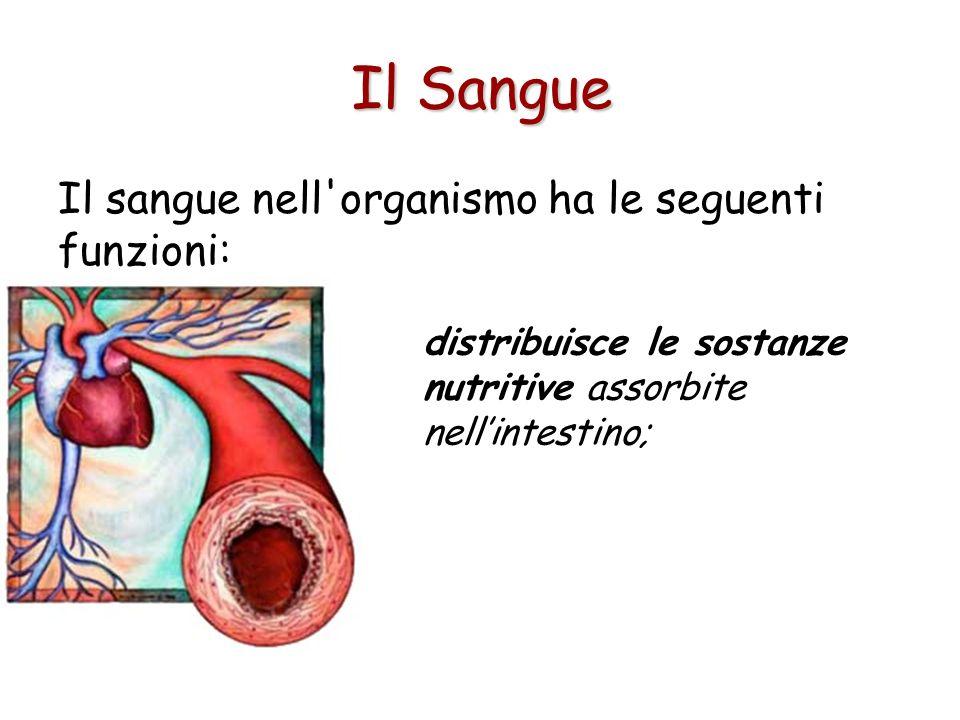 Il Sangue Il sangue nell organismo ha le seguenti funzioni: