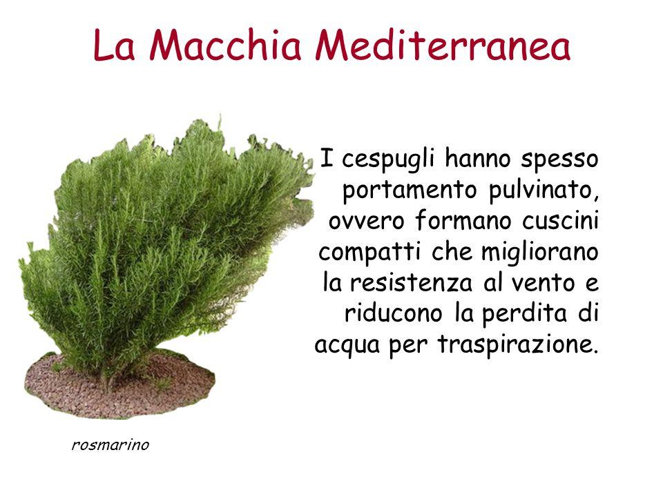 La Macchia Mediterranea