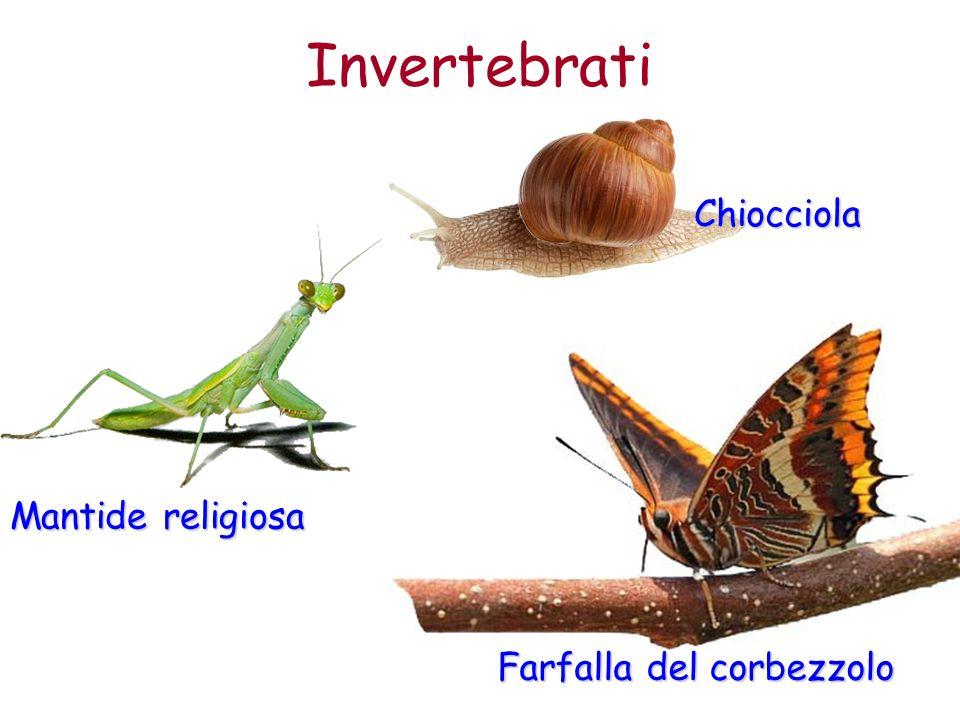 Invertebrati Chiocciola Mantide religiosa Farfalla del corbezzolo
