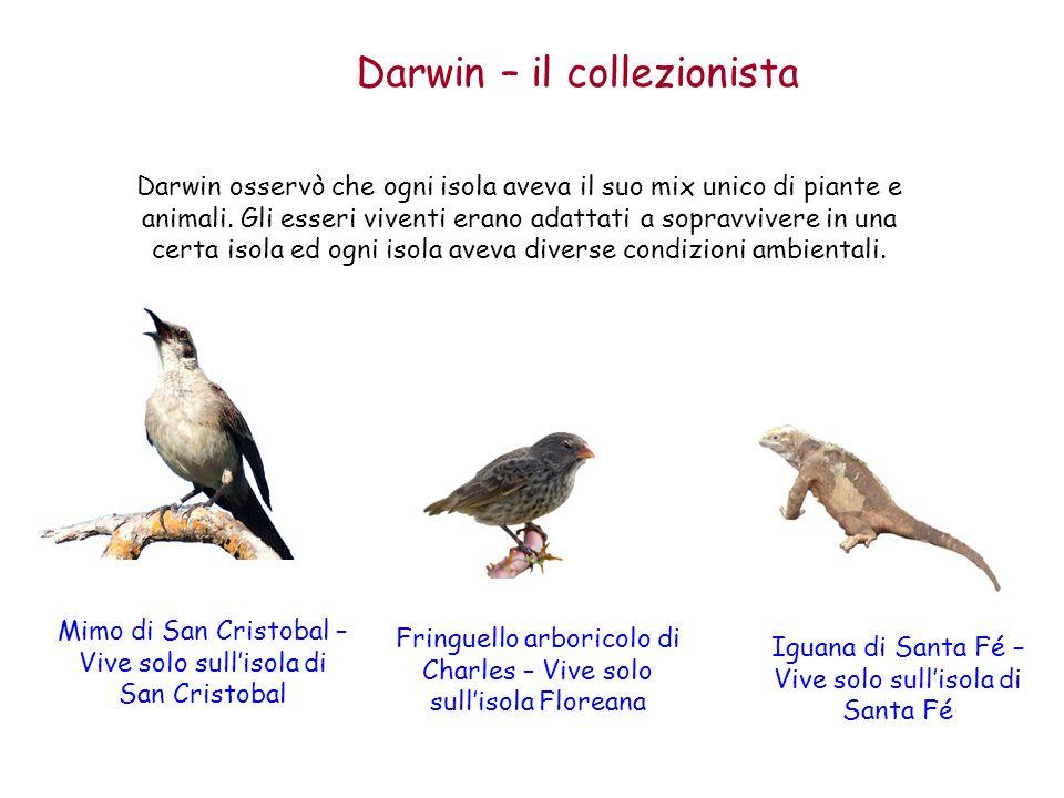 Darwin – il collezionista