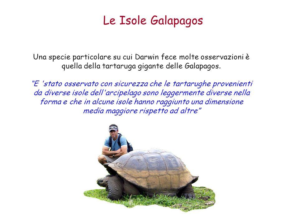 Le Isole Galapagos Una specie particolare su cui Darwin fece molte osservazioni è quella della tartaruga gigante delle Galapagos.