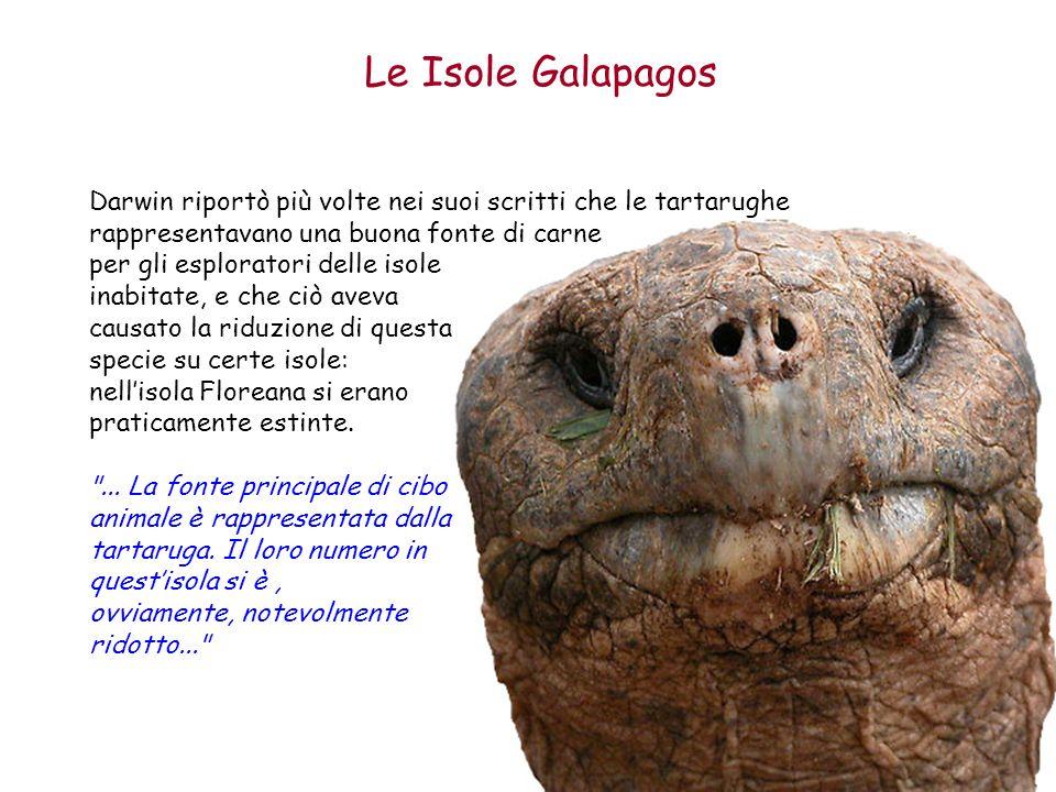 Le Isole Galapagos Darwin riportò più volte nei suoi scritti che le tartarughe rappresentavano una buona fonte di carne.