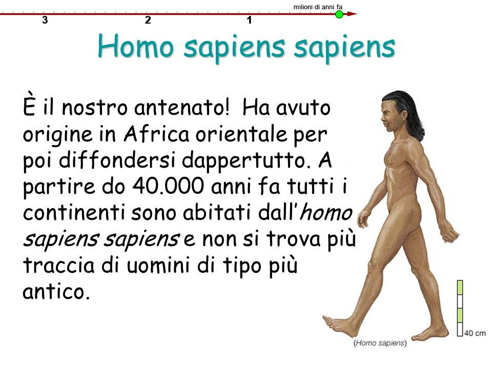 milioni di anni fa Homo sapiens sapiens.