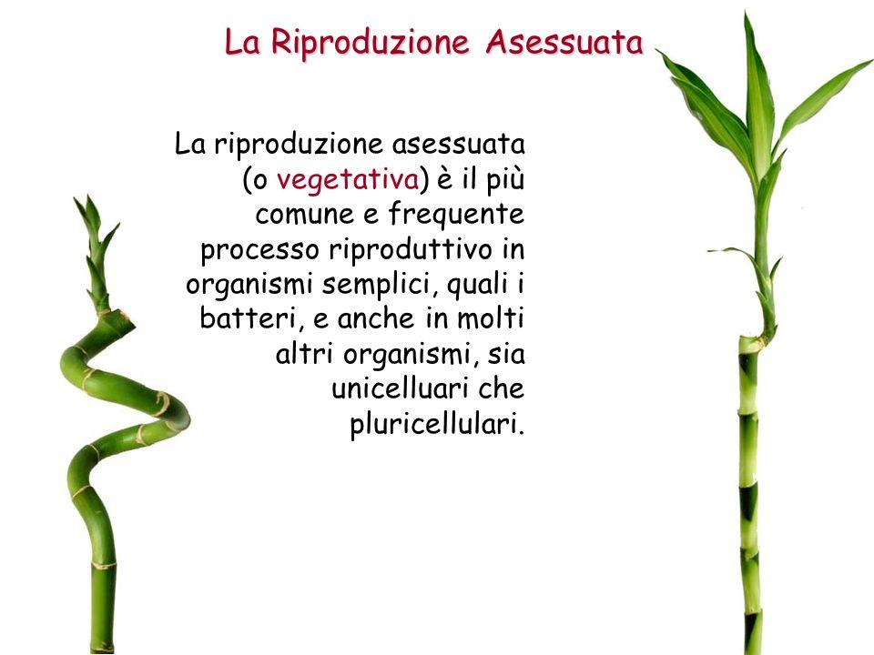La Riproduzione Asessuata