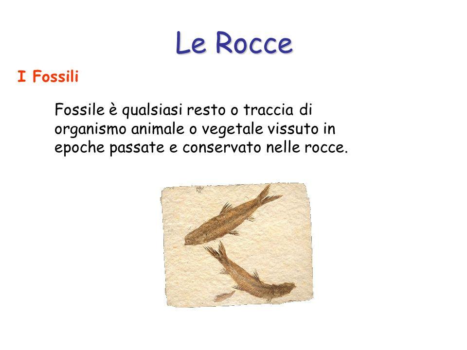 Le Rocce I Fossili.