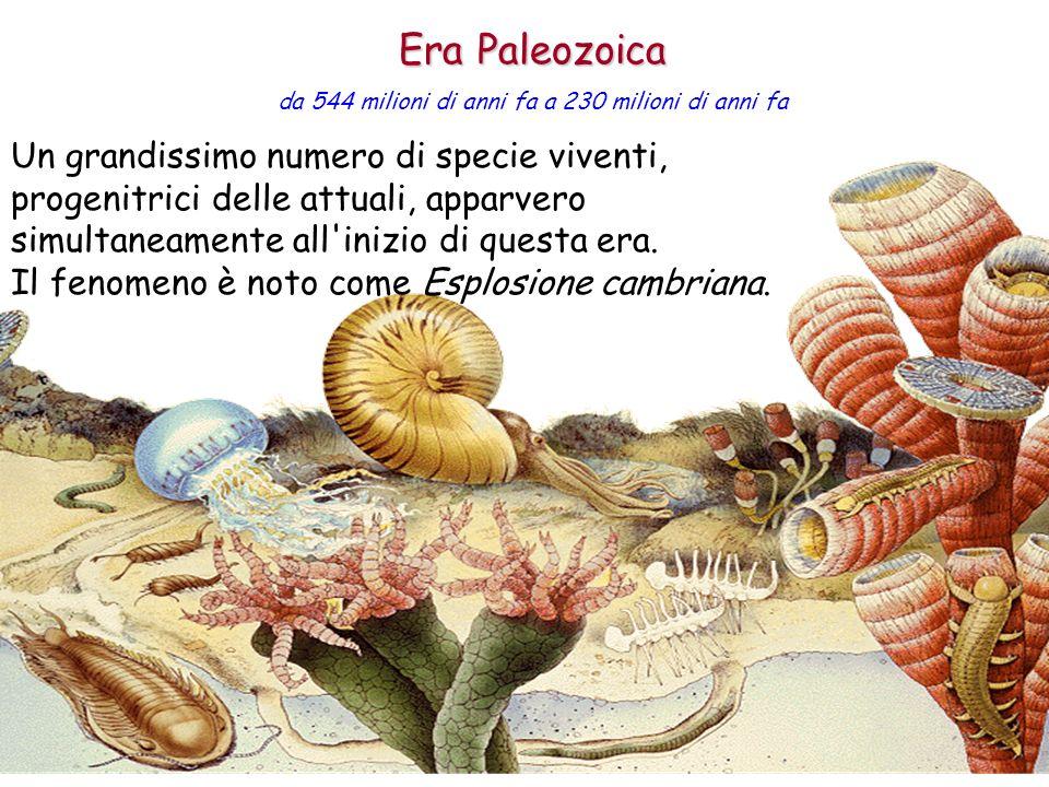 Era Paleozoica da 544 milioni di anni fa a 230 milioni di anni fa.