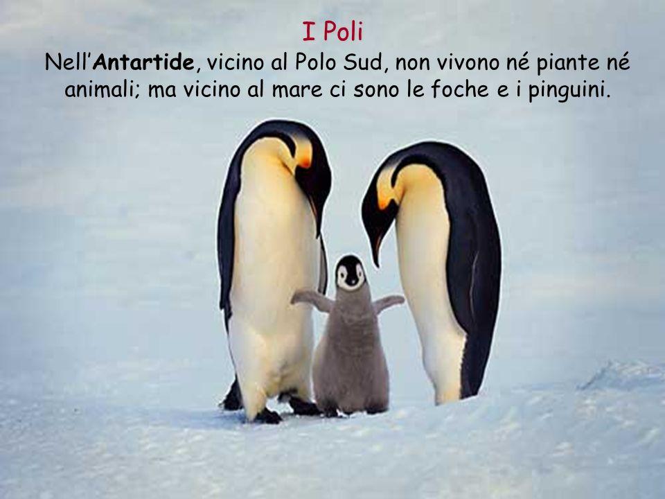 I Poli Nell'Antartide, vicino al Polo Sud, non vivono né piante né animali; ma vicino al mare ci sono le foche e i pinguini.