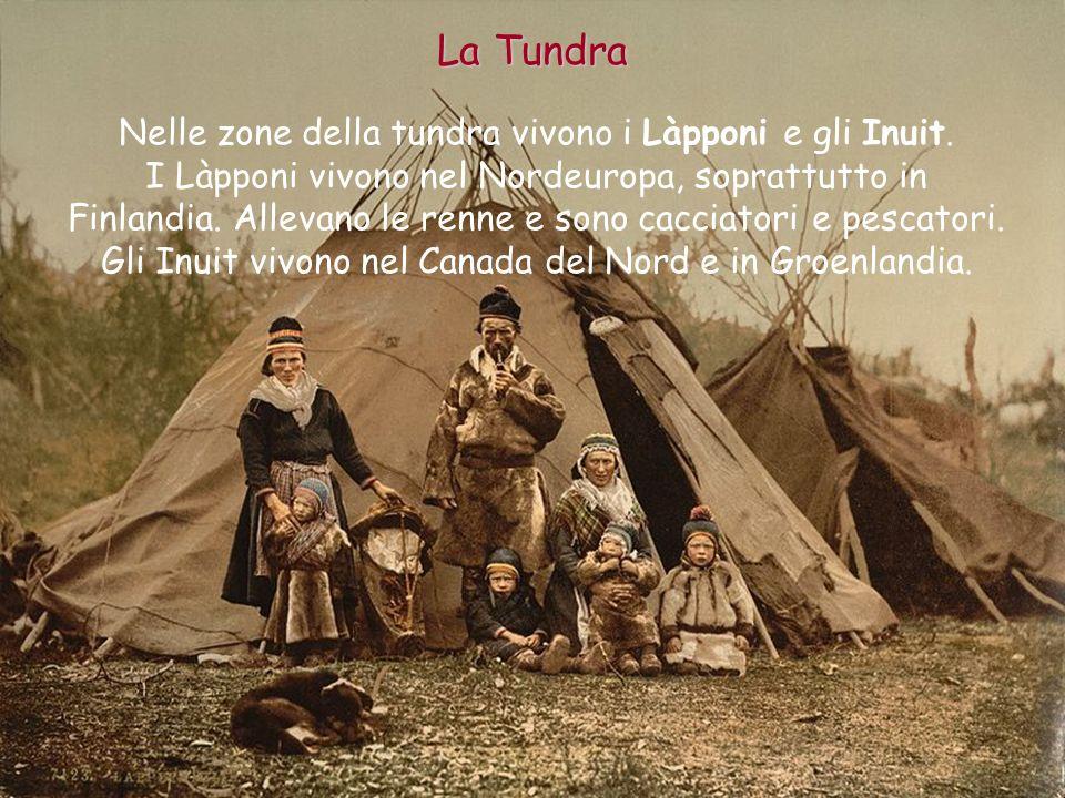 La Tundra Nelle zone della tundra vivono i Làpponi e gli Inuit.