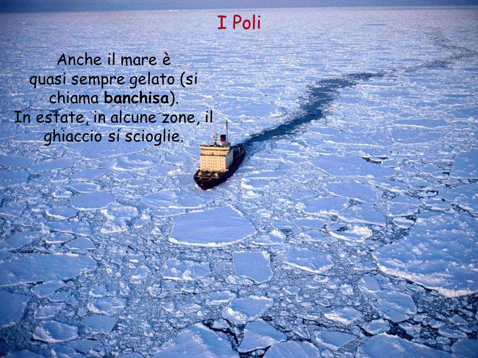 I Poli Anche il mare è quasi sempre gelato (si chiama banchisa).