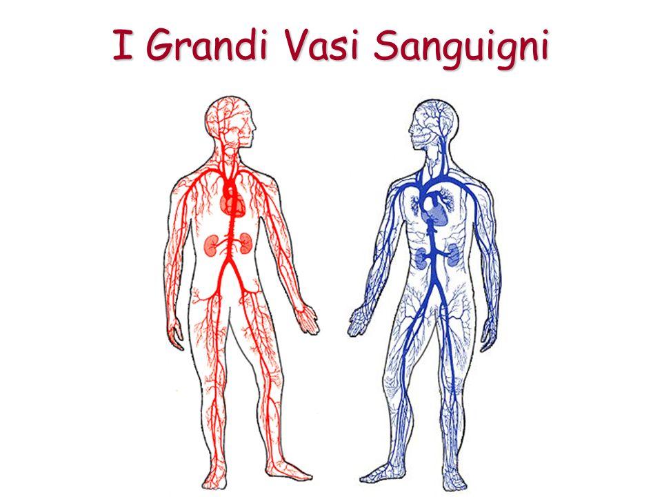 I Grandi Vasi Sanguigni
