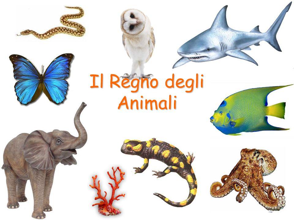 Il Regno degli Animali