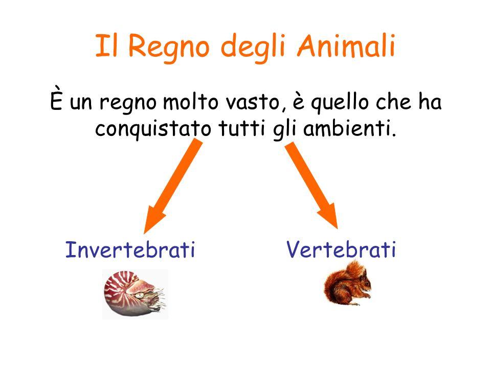 Il Regno degli Animali È un regno molto vasto, è quello che ha conquistato tutti gli ambienti. Invertebrati.