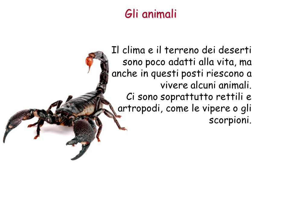 Gli animali Il clima e il terreno dei deserti sono poco adatti alla vita, ma anche in questi posti riescono a vivere alcuni animali.