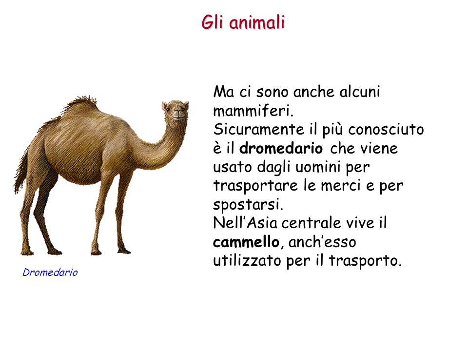 Gli animali Ma ci sono anche alcuni mammiferi.