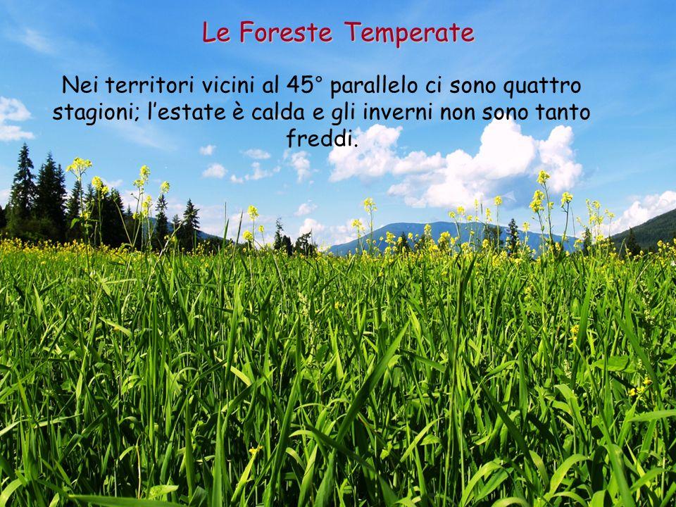 Le Foreste Temperate Nei territori vicini al 45° parallelo ci sono quattro stagioni; l'estate è calda e gli inverni non sono tanto freddi.