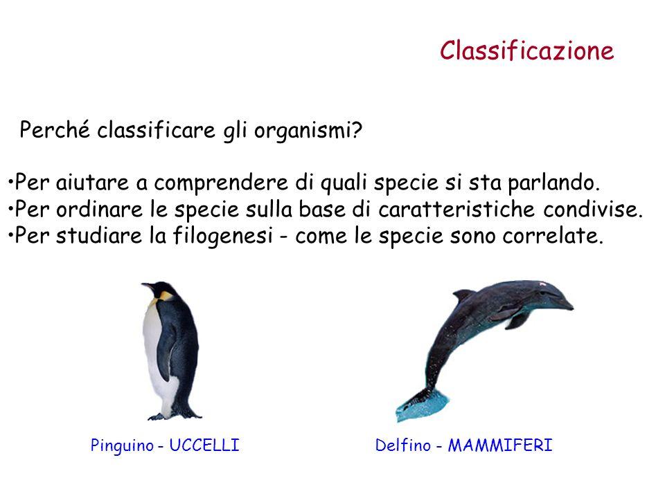 Classificazione Perché classificare gli organismi