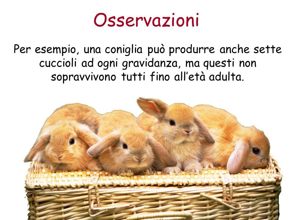 Osservazioni Per esempio, una coniglia può produrre anche sette cuccioli ad ogni gravidanza, ma questi non sopravvivono tutti fino all'età adulta.
