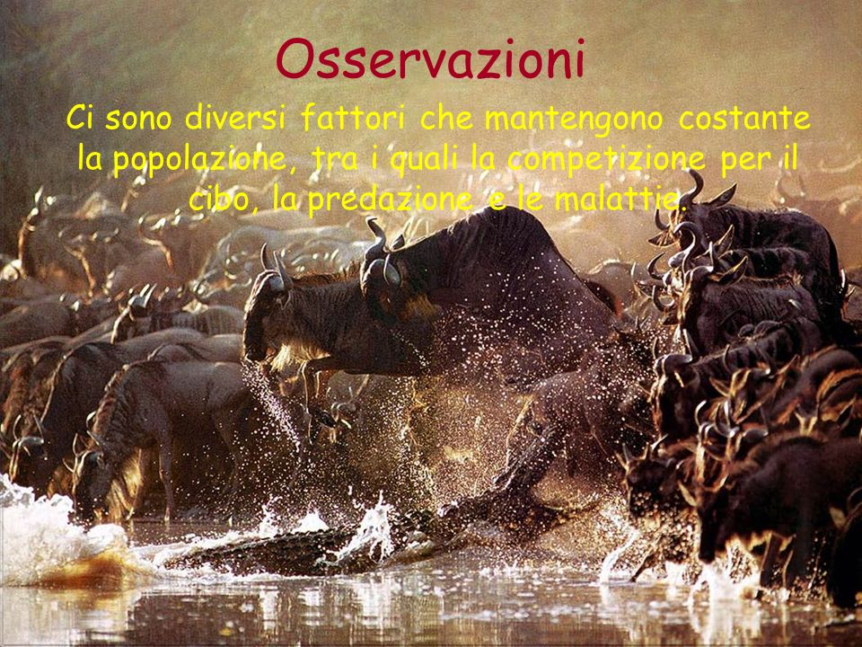 Osservazioni Ci sono diversi fattori che mantengono costante la popolazione, tra i quali la competizione per il cibo, la predazione e le malattie.