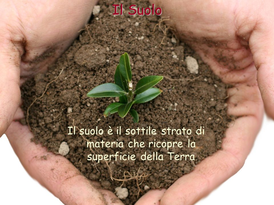 Il Suolo Il suolo è il sottile strato di materia che ricopre la superficie della Terra