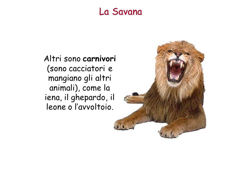 iena, il ghepardo, il leone o l'avvoltoio.