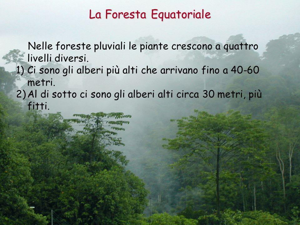La Foresta Equatoriale