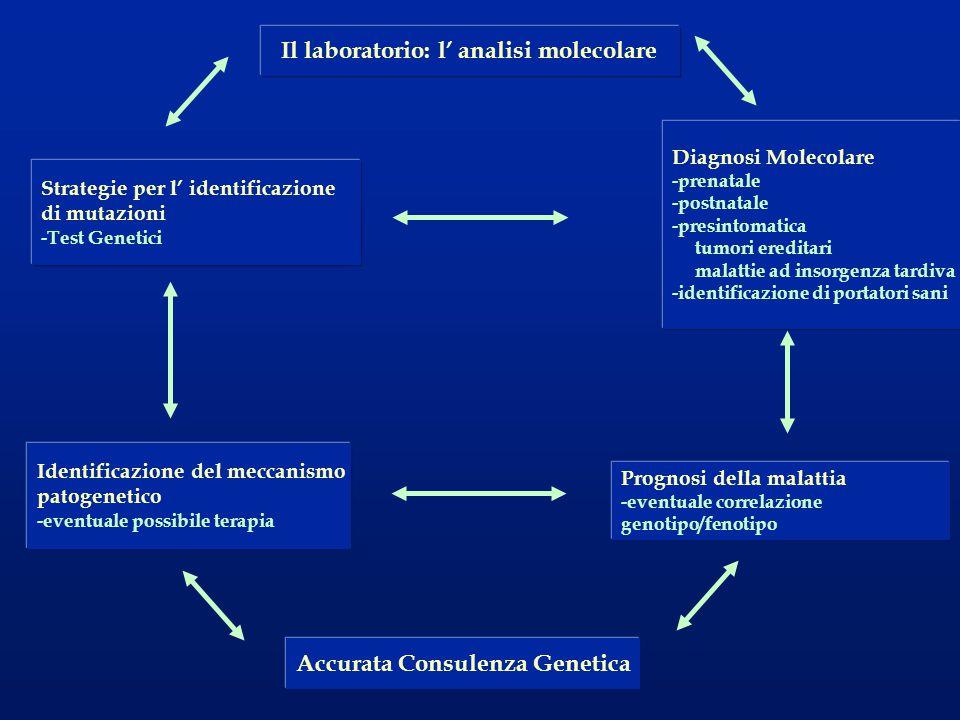 Il laboratorio: l' analisi molecolare Accurata Consulenza Genetica