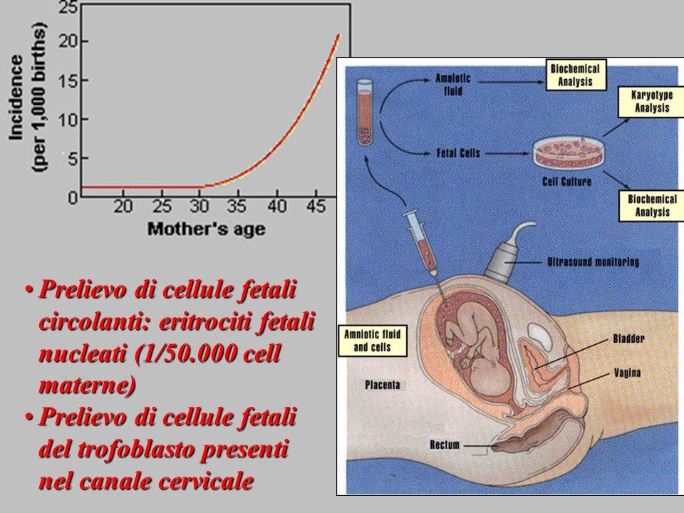 Prelievo di cellule fetali circolanti: eritrociti fetali nucleati (1/50.000 cell materne)
