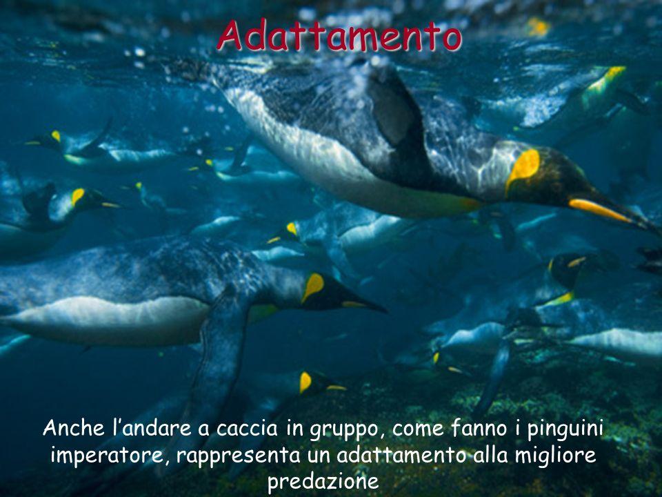 Adattamento Anche l'andare a caccia in gruppo, come fanno i pinguini imperatore, rappresenta un adattamento alla migliore predazione.