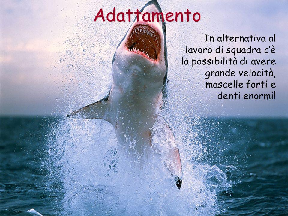 AdattamentoIn alternativa al lavoro di squadra c'è la possibilità di avere grande velocità, mascelle forti e denti enormi!