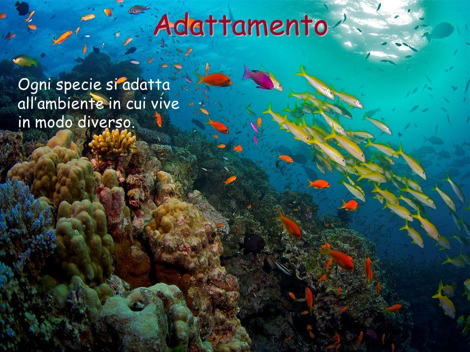 Adattamento Ogni specie si adatta all'ambiente in cui vive
