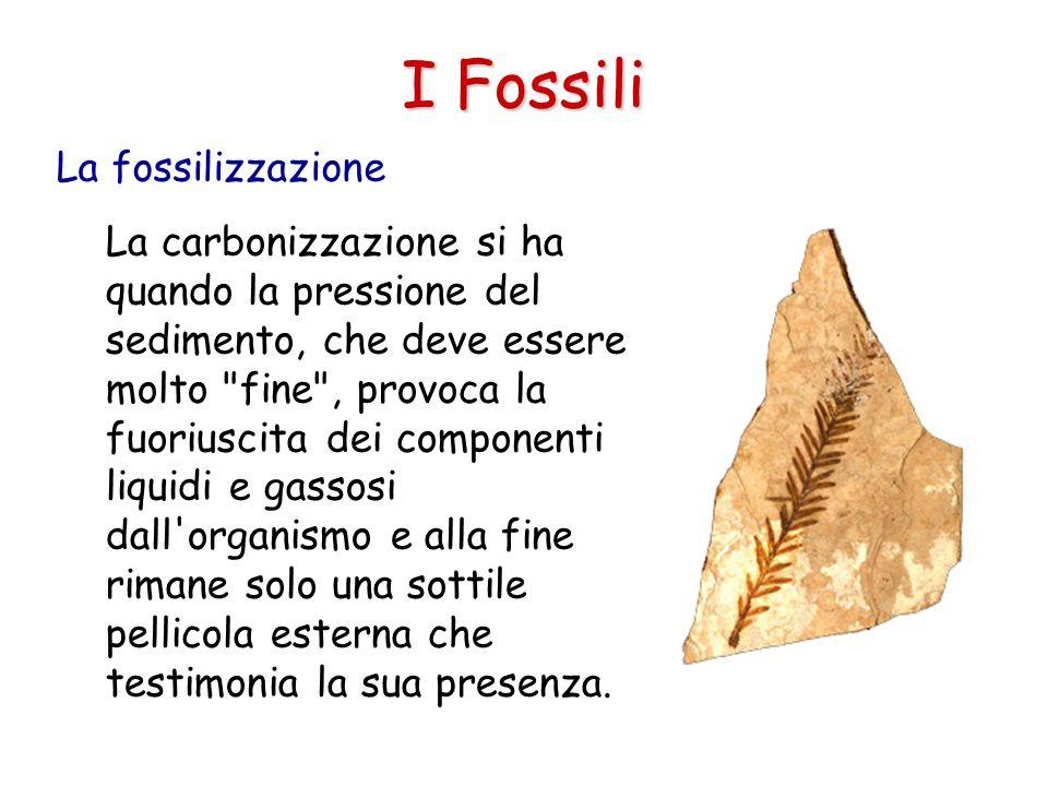 I Fossili La fossilizzazione