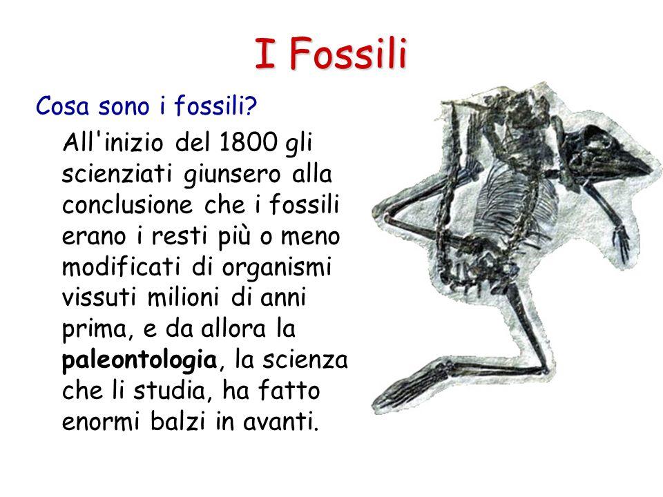 I Fossili Cosa sono i fossili