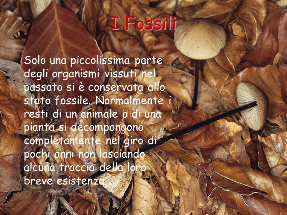 I Fossili