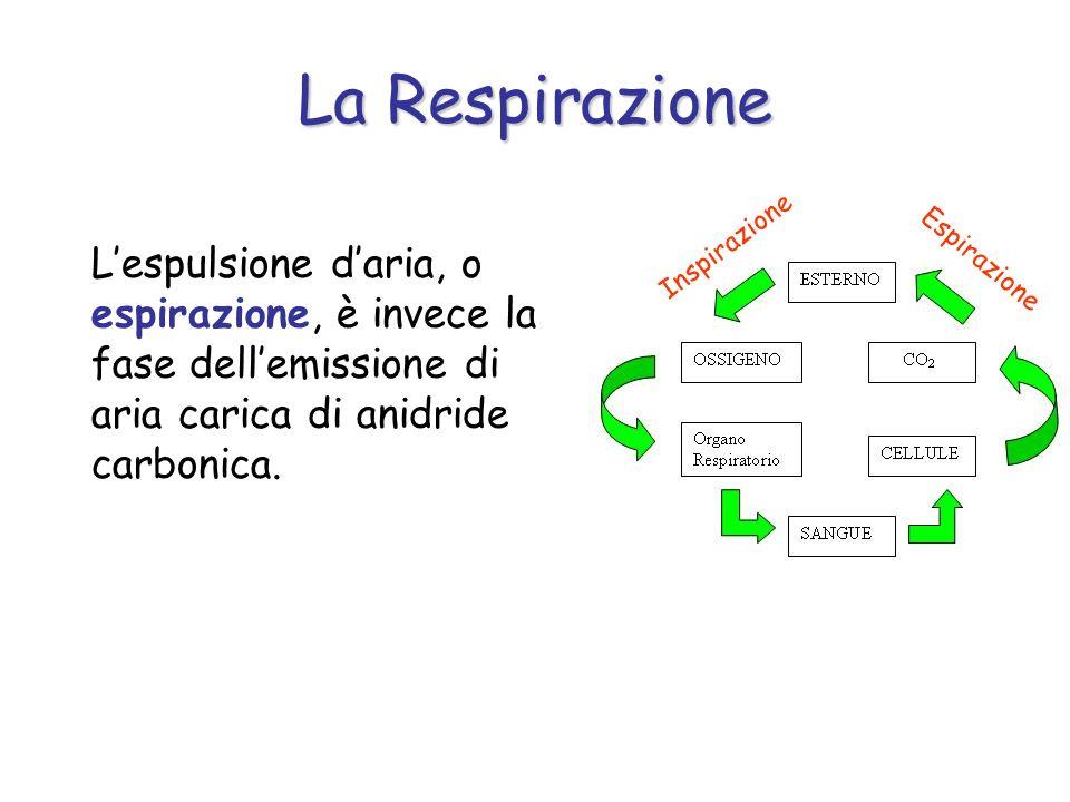 La RespirazioneInspirazione. L'espulsione d'aria, o espirazione, è invece la fase dell'emissione di aria carica di anidride carbonica.