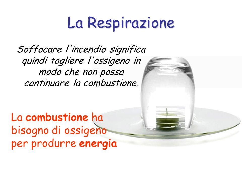La RespirazioneSoffocare l incendio significa quindi togliere l ossigeno in modo che non possa continuare la combustione.