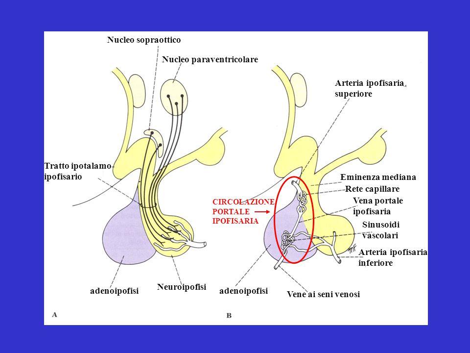 Nucleo paraventricolare