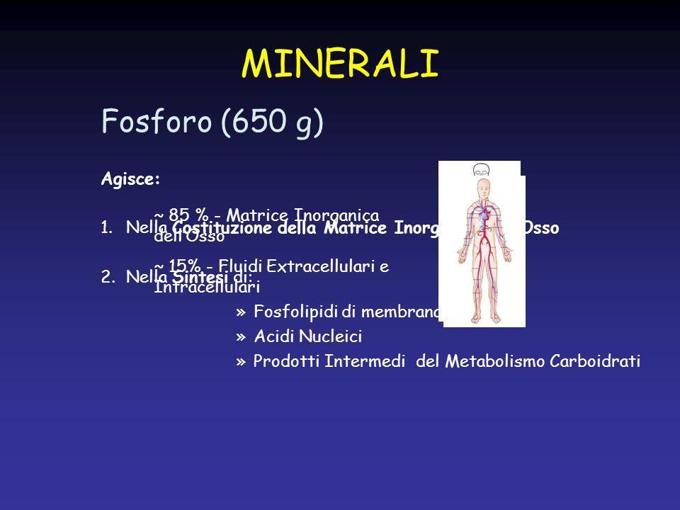 MINERALI Fosforo (650 g) Agisce: