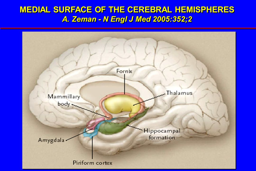 MEDIAL SURFACE OF THE CEREBRAL HEMISPHERES
