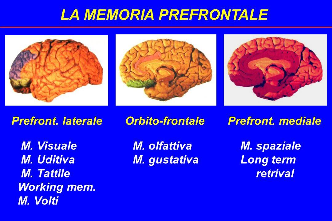 LA MEMORIA PREFRONTALE