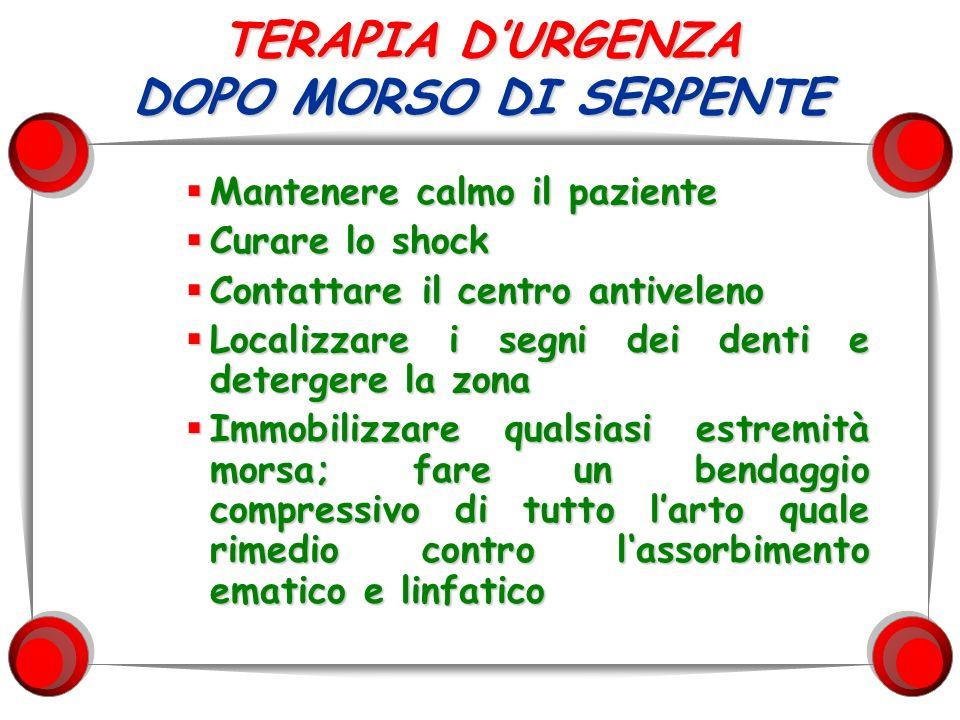 TERAPIA D'URGENZA DOPO MORSO DI SERPENTE
