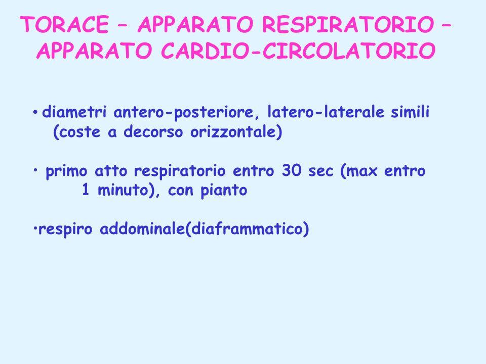 TORACE – APPARATO RESPIRATORIO – APPARATO CARDIO-CIRCOLATORIO